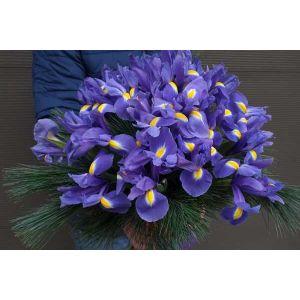 Buchet de irisi