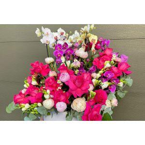 Ghiveci Orhidee bujori trandafiri frezii