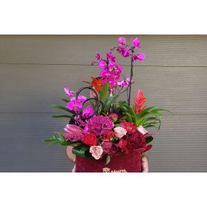 Ghiveci 3 orhidee, guzmania si flori taiate